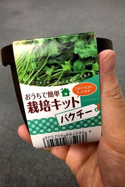 パクチー栽培.JPG