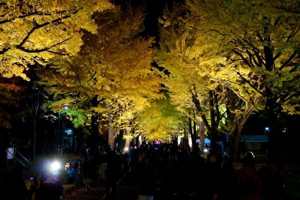 金葉祭4.JPG